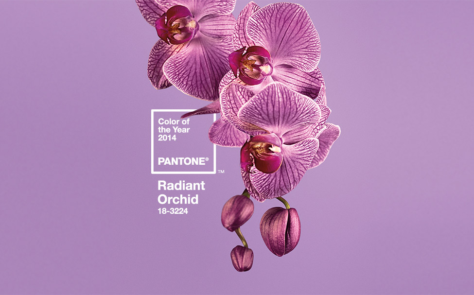 Sedia Pantone Rosa : Pantone shake shock